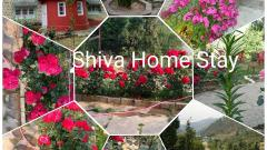 Shiva Home Stay pandavshila Janjehli